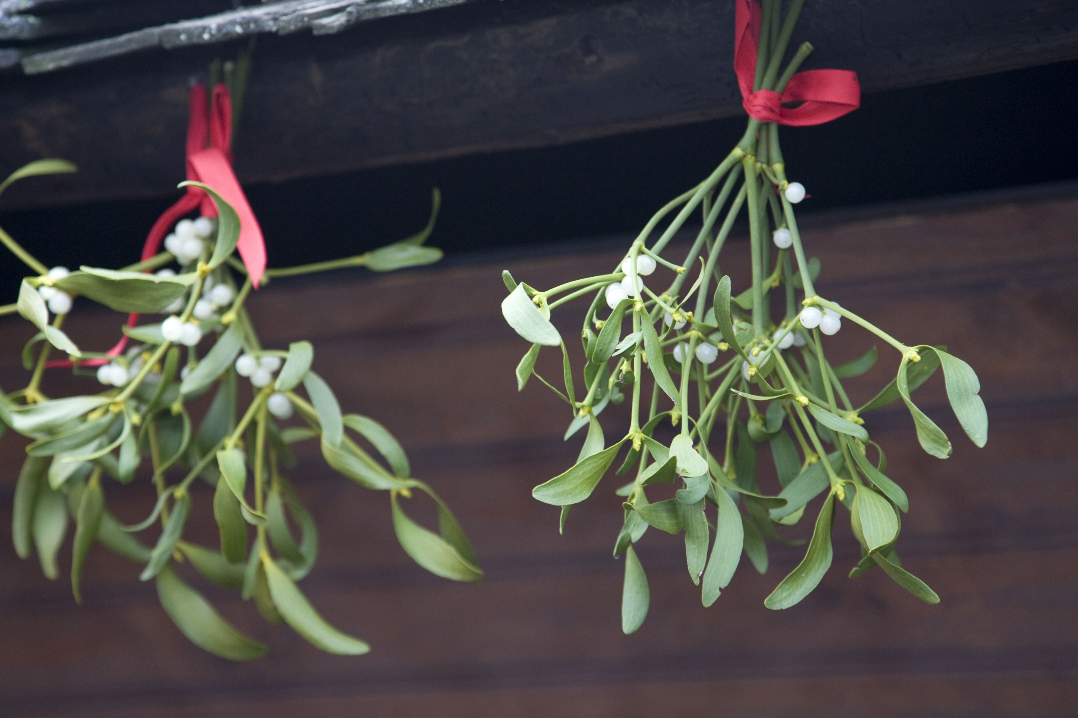 two bunches of mistletoe hanging outside