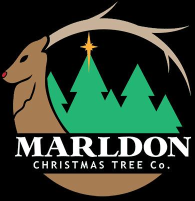 Home » Marldon Christmas Trees